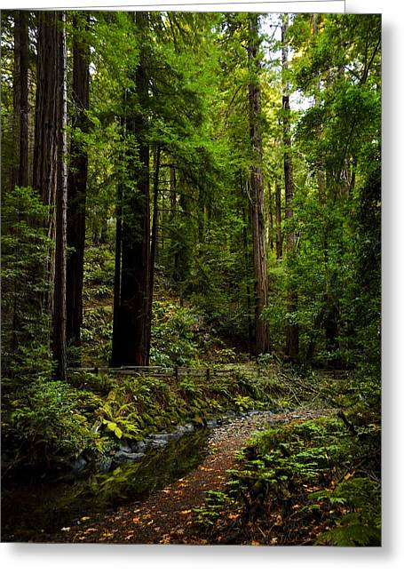 By The Stream In Muir Woods Greeting Card