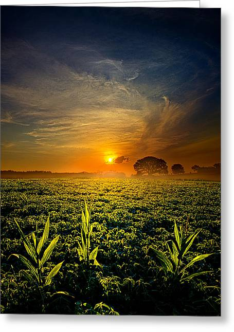 Geographic Greeting Cards - By Three Greeting Card by Phil Koch