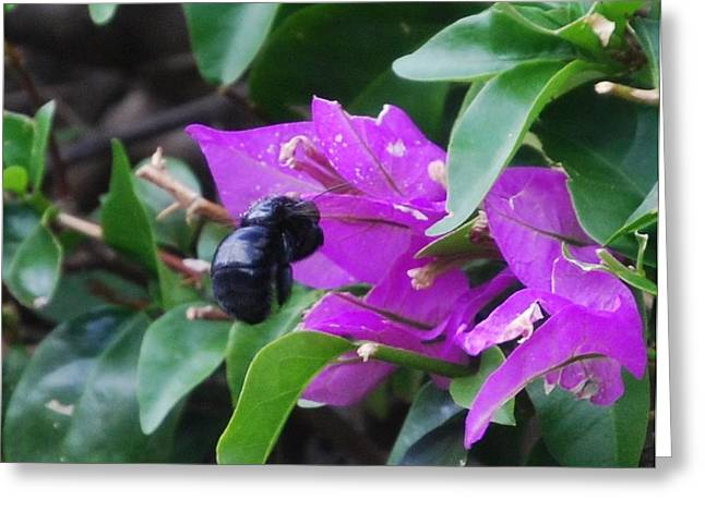 Bzzzz Greeting Card by Lakida Mcnair