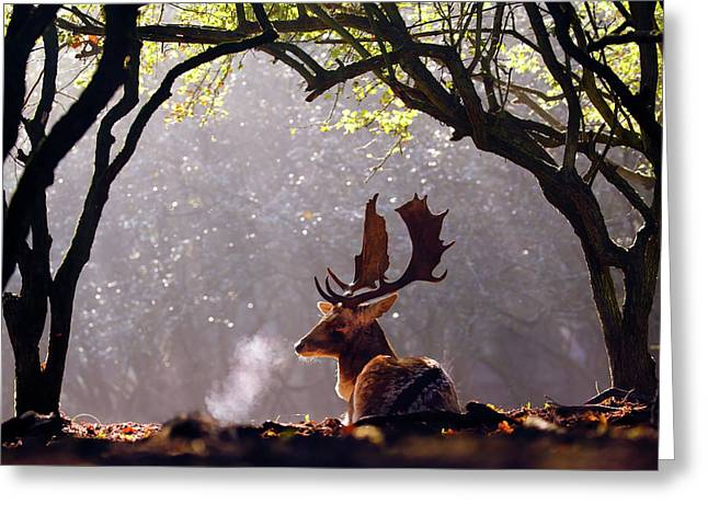 C-c-c-cold Breath - Fallow Deer Buck Greeting Card by Roeselien Raimond