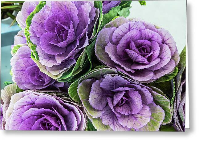 Cabbage Flower Greeting Card