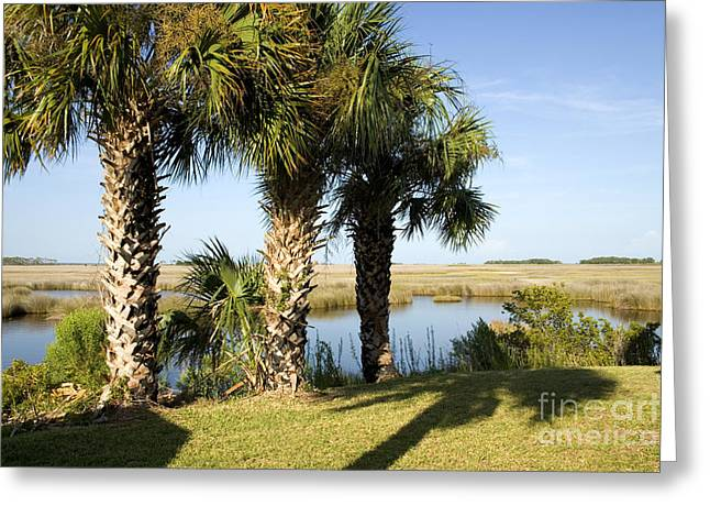 Cabbage Palmetto Trees Greeting Card by Inga Spence