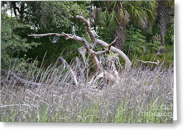 Greeting Card featuring the photograph Cabbage Palms And Driftwood by Carol  Bradley