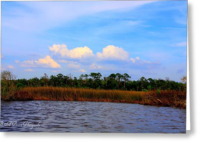 Cabbage Palms And Salt Marsh Grasses Of The Waccasassa Preserve Greeting Card by Barbara Bowen