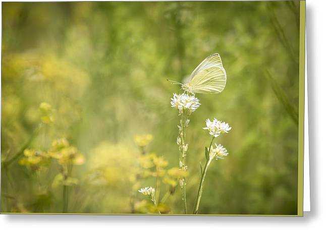 Cabbage White Greeting Card by Thomas Young
