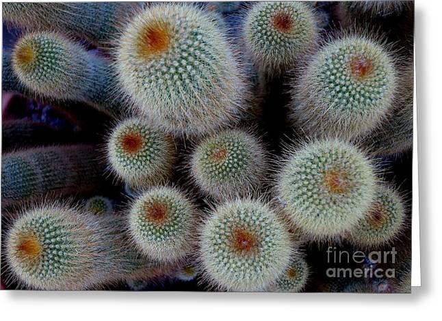 Cacti Family Greeting Card