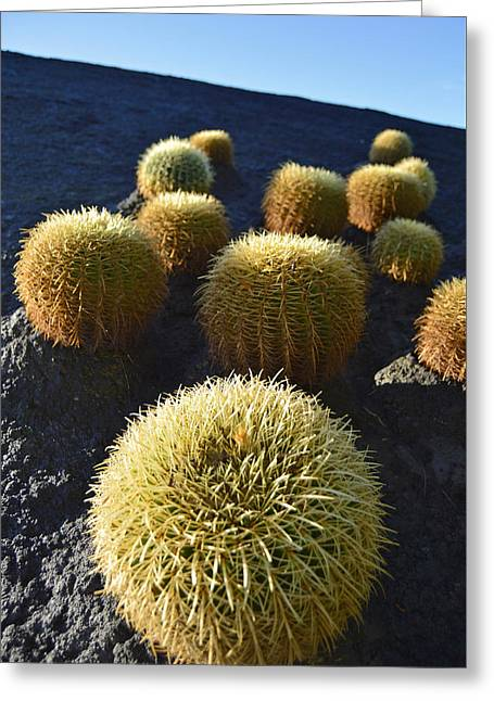 Cacti On The Roof Greeting Card
