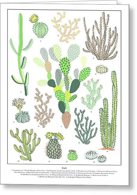 Cacti Varieties Greeting Card by Jacqueline Colley