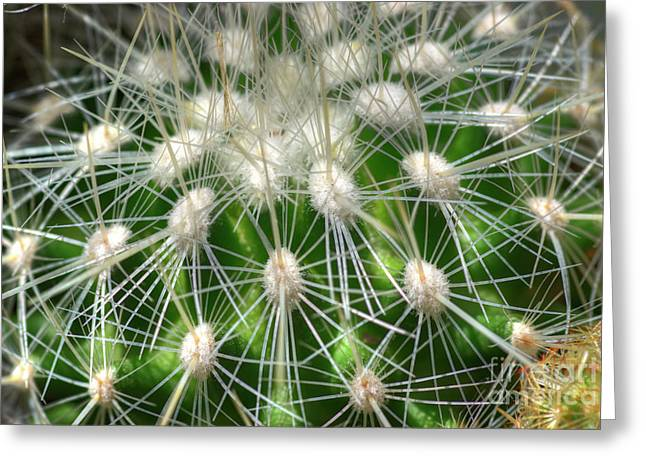 Greeting Card featuring the photograph Cactus 1 by Jim and Emily Bush