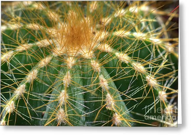 Greeting Card featuring the photograph Cactus 2 by Jim and Emily Bush