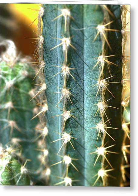 Greeting Card featuring the photograph Cactus 3 by Jim and Emily Bush