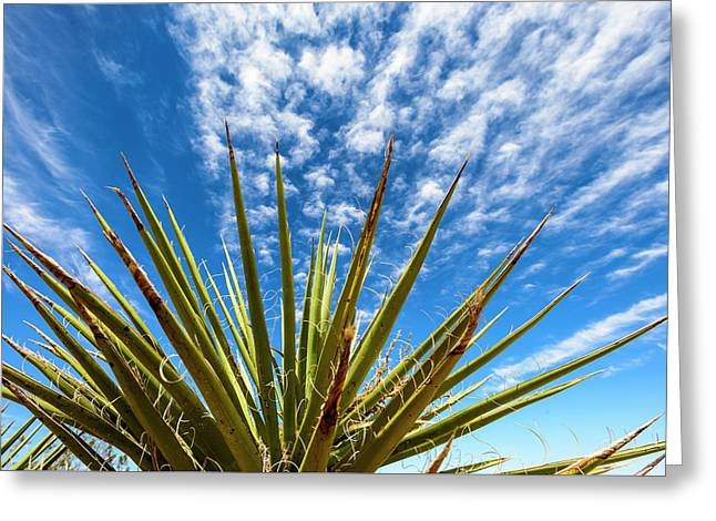 Cactus And Blue Sky Greeting Card by Amyn Nasser