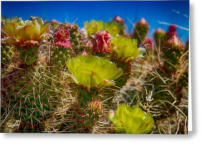 Cactus At The End Of The Road Greeting Card by Bartz Johnson