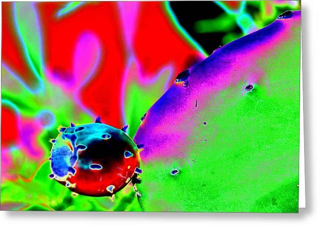 Cactus Bud Greeting Card by Peter  McIntosh