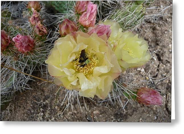 Cactus Buffet Greeting Card