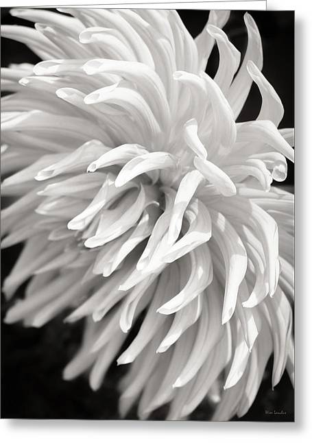 Cactus Dahlia Greeting Card