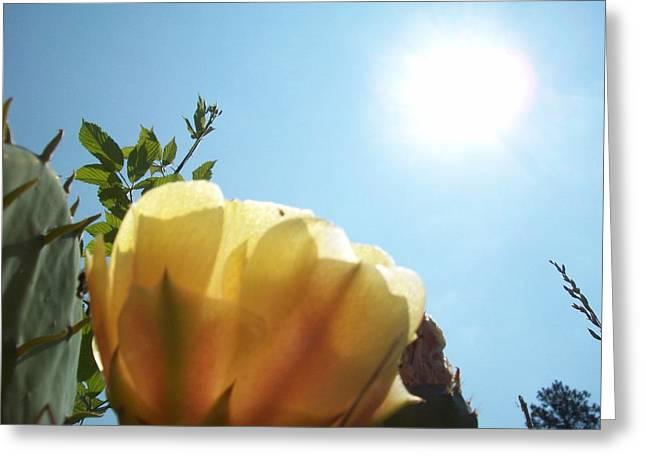 Cactus Enjoying Sun Light Greeting Card