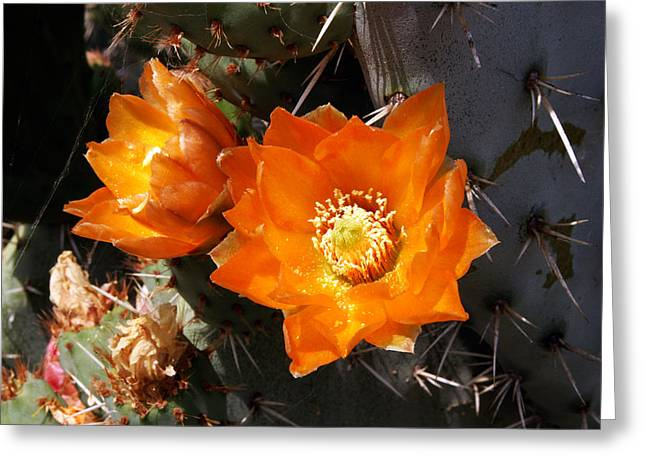 Greeting Card featuring the photograph Cactus Flower by Gary Brandes