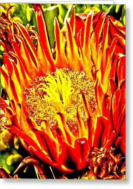 Cactus Flower Greeting Card by Judi Saunders