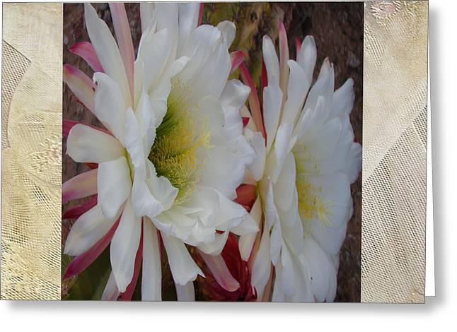 Cactus Flower Song Of Solomon Greeting Card by Beverly Guilliams