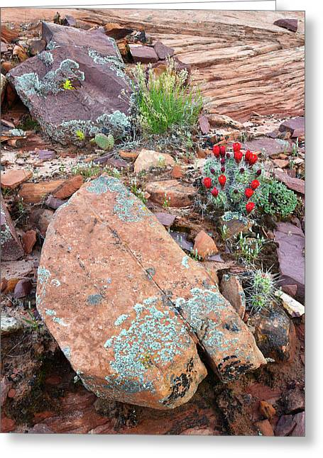 Cactus Garden Greeting Card by Ray Mathis