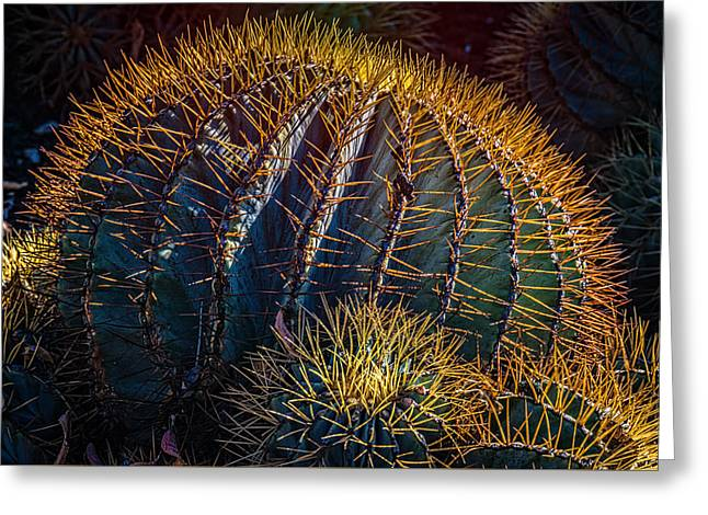 Greeting Card featuring the photograph Cactus by Harry Spitz