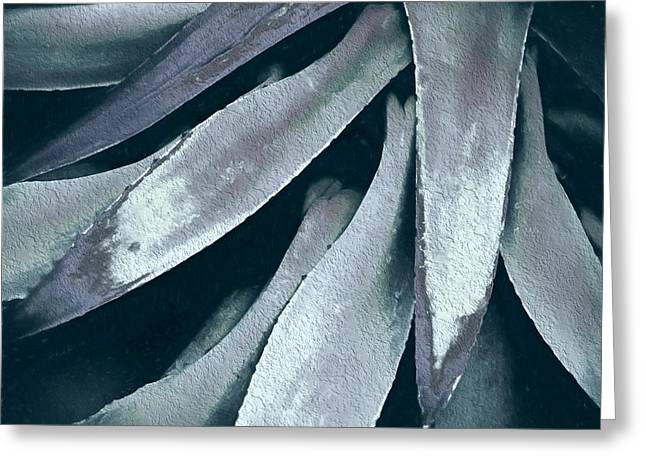 Greeting Card featuring the photograph Cactus In Blue And Grey by Julie Palencia