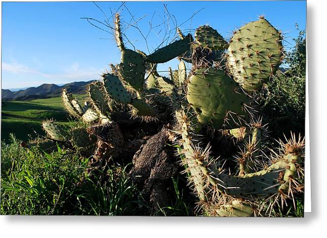 Greeting Card featuring the photograph Cactus In The Mountains by Matt Harang
