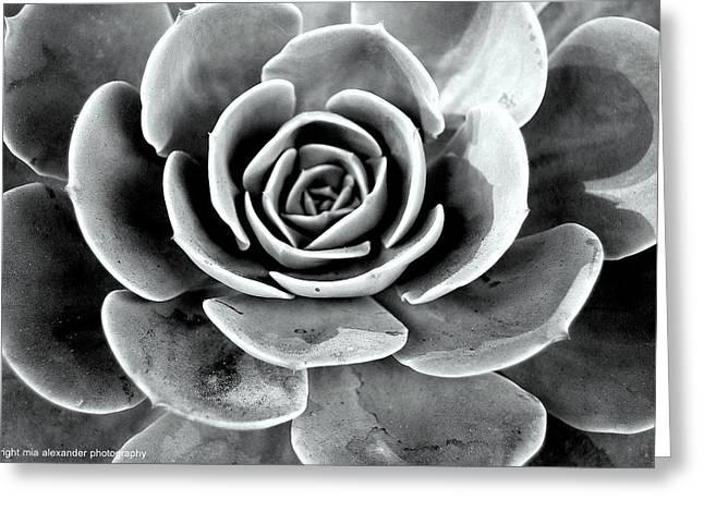 Cactus Ll Greeting Card