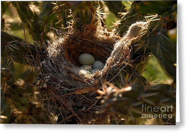 Cactus Nest Greeting Card by David Lee Thompson