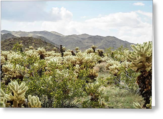 Cactus Paradise Greeting Card