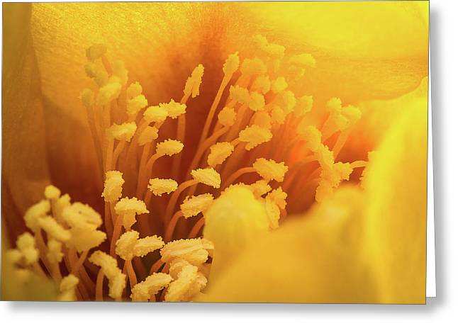 Cactus Pollen Greeting Card