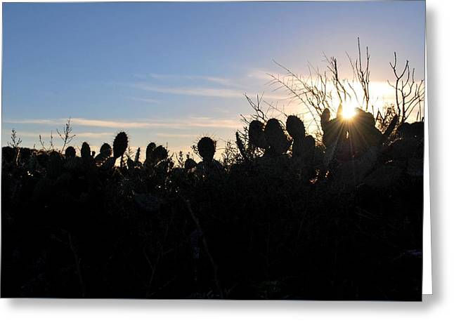 Greeting Card featuring the photograph Cactus Silhouettes by Matt Harang