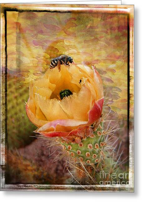 Cactus Spring Beauty W Frame Greeting Card by Beverly Guilliams