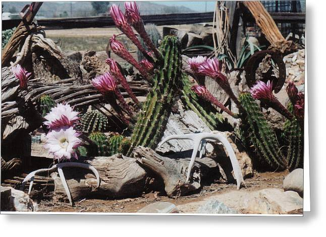 Cactus Still Life Greeting Card by E M Murray