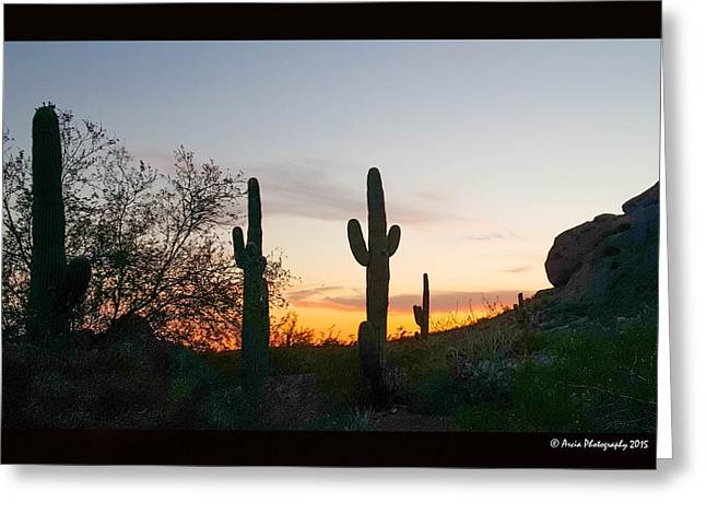 Cactus Sunset Greeting Card