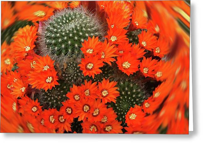 Cactus Swirl Greeting Card
