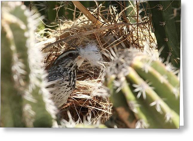 Cactus Wren Feather Greeting Card