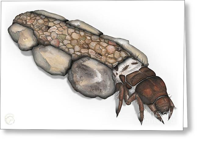 Caddisfly Larva Nymph Goeridae_silo_pallipes -  Greeting Card