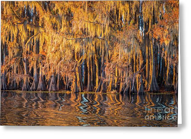 Caddo Abstract Trees Greeting Card