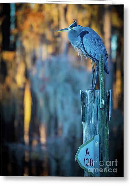 Caddo Blue Heron Greeting Card