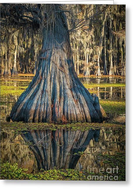 Caddo Cypress Bottom Greeting Card