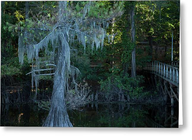 Caddo Lake #1 Greeting Card