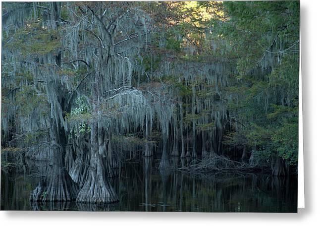 Caddo Lake #2 Greeting Card