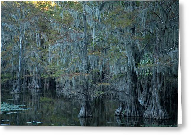 Caddo Lake #3 Greeting Card