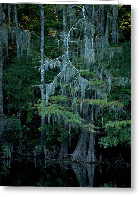 Caddo Lake #4 Greeting Card