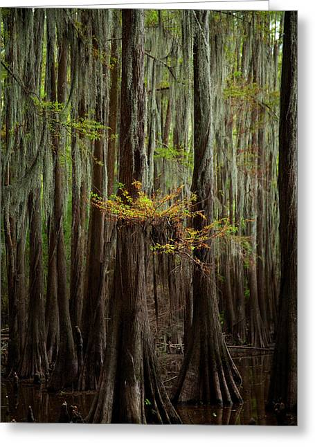 Caddo Lake #5 Greeting Card