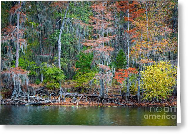 Caddo Lake Fall Foliage Greeting Card by Inge Johnsson