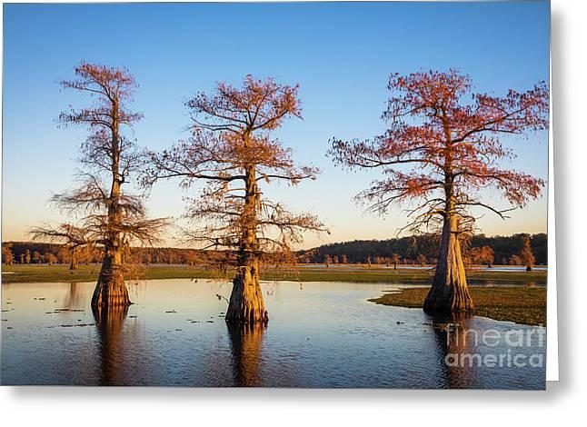 Caddo Three Trees Greeting Card