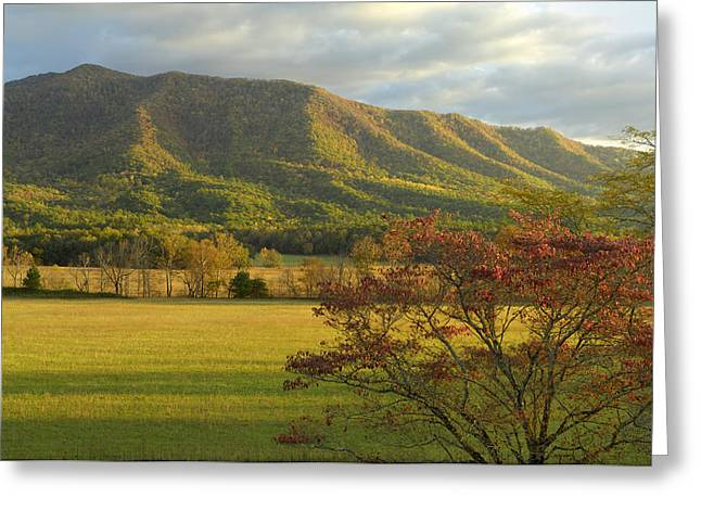 Cades Cove Autumn Sunset In Great Smoky Mountains Greeting Card by Darrell Young